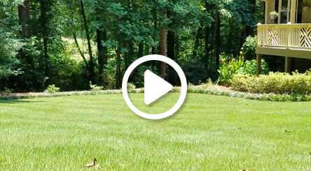 Video still for Zoysia Atlanta lawn care