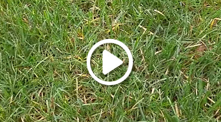 video about atlanta lawn care rust treatment
