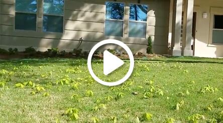 lawn care service to minimize tree saplings video