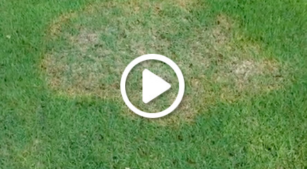 zoysia patch treatment lawn care services