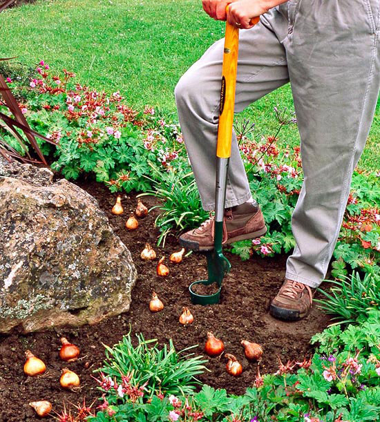 Plant Bulbs In Fall For Spring Blooms