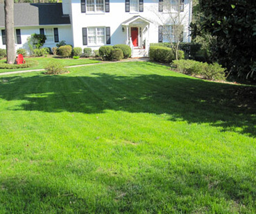 Services to beautiful Atlanta lawn