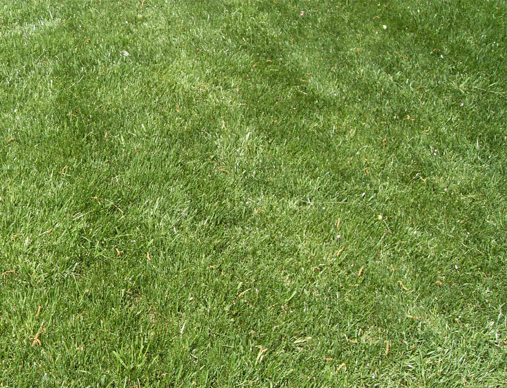 Lush lawn after lawn care maintenance