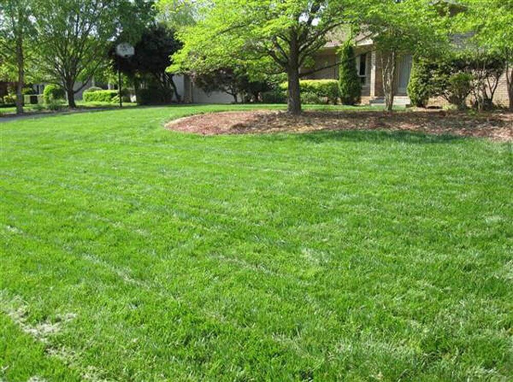 great results after lawn care services