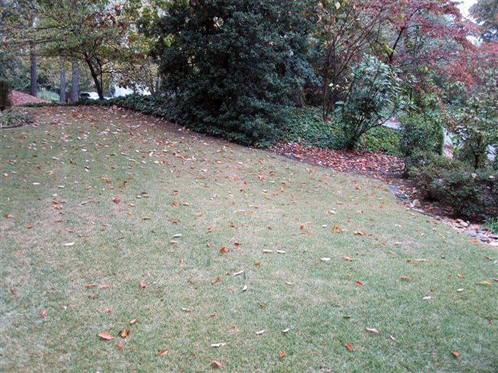 Lawn services in Decatur (before)