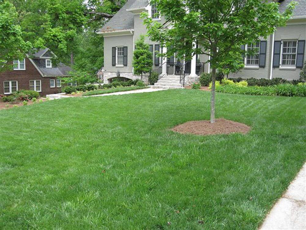 Nice green lawn after Arbor-Nomics services