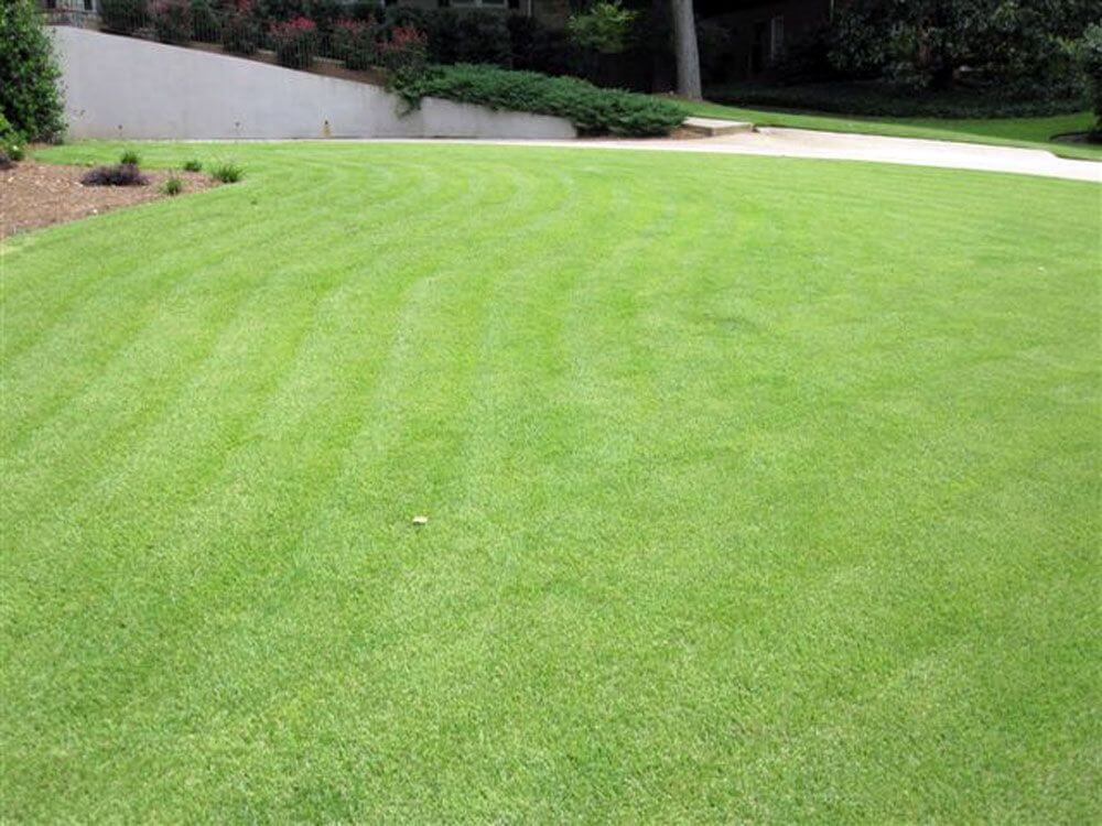 Stunning lawn after Arbor-Nomics services