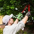 Atlanta tree services, removal, pruning and more!