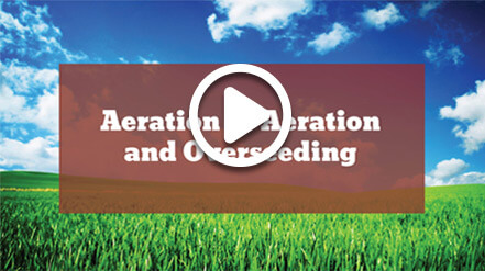 video showing aeration lawn care services