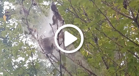 Video still for treating fall webworms