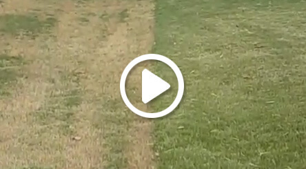lawn care video about mowing