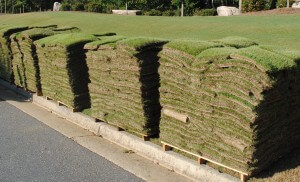 Top Tips On How To Lay Sod In Atlanta