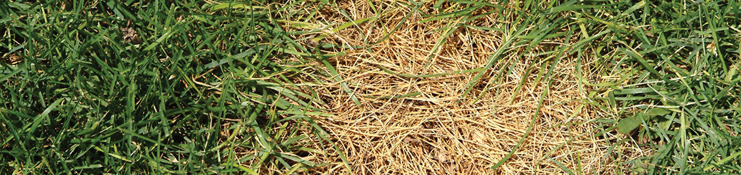 Our Atlanta fungicide treatment is a must for any yard.