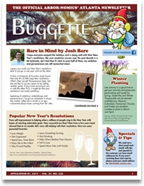 The Buggette 2017