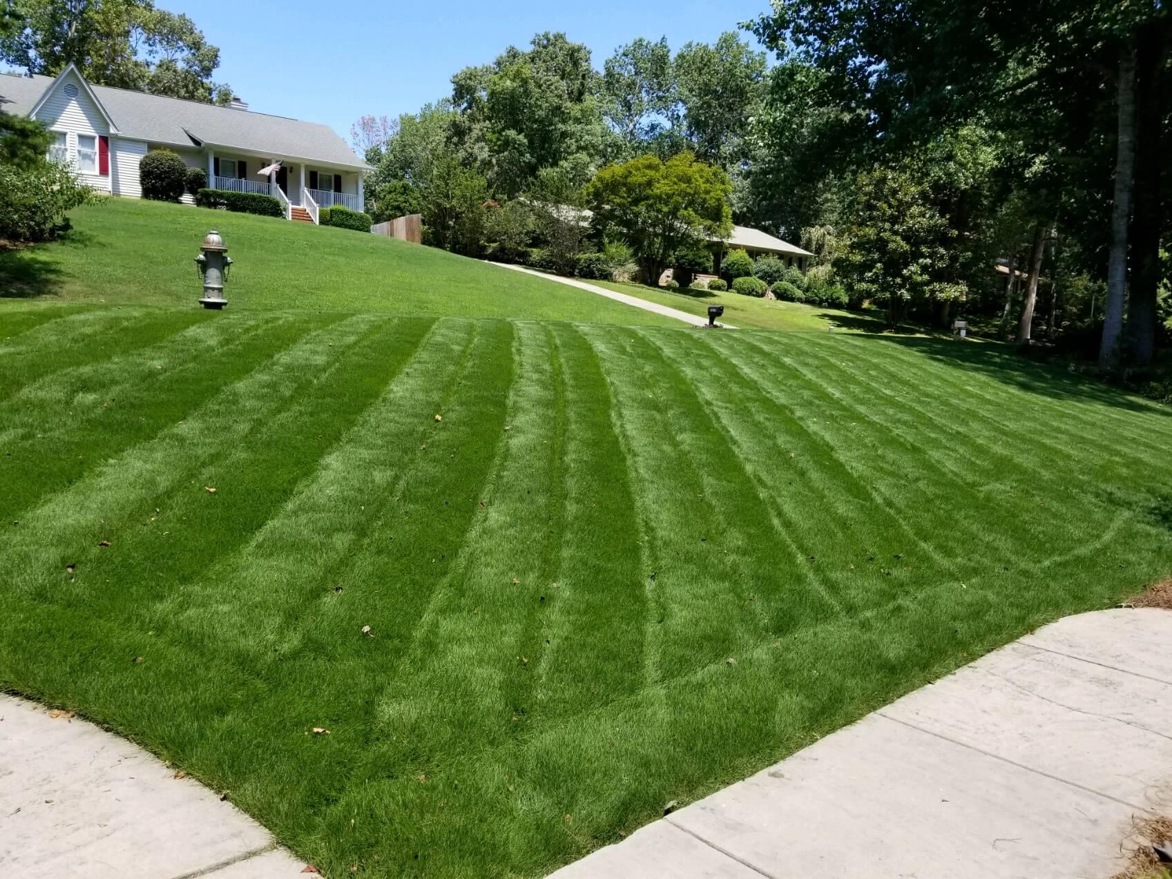 Warm Vs Cool Season Grass Arbor Nomics 174