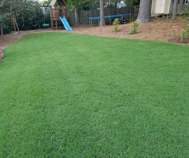 Beautiful green lawn after services completed