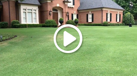 How to Treat Dry Spots in Zoysia