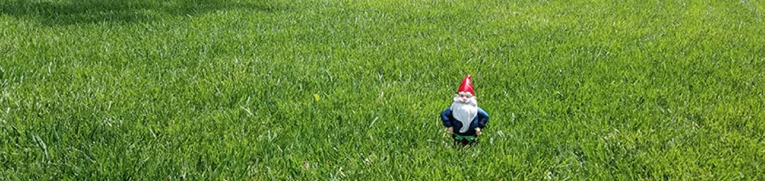 Atlanta lawn care fescue grass