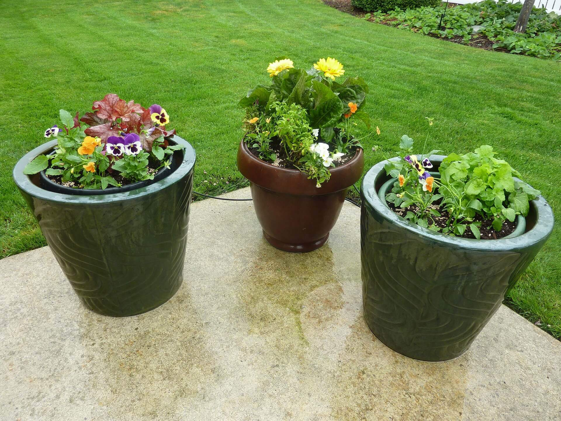 Three potted plants on outdoor patio.