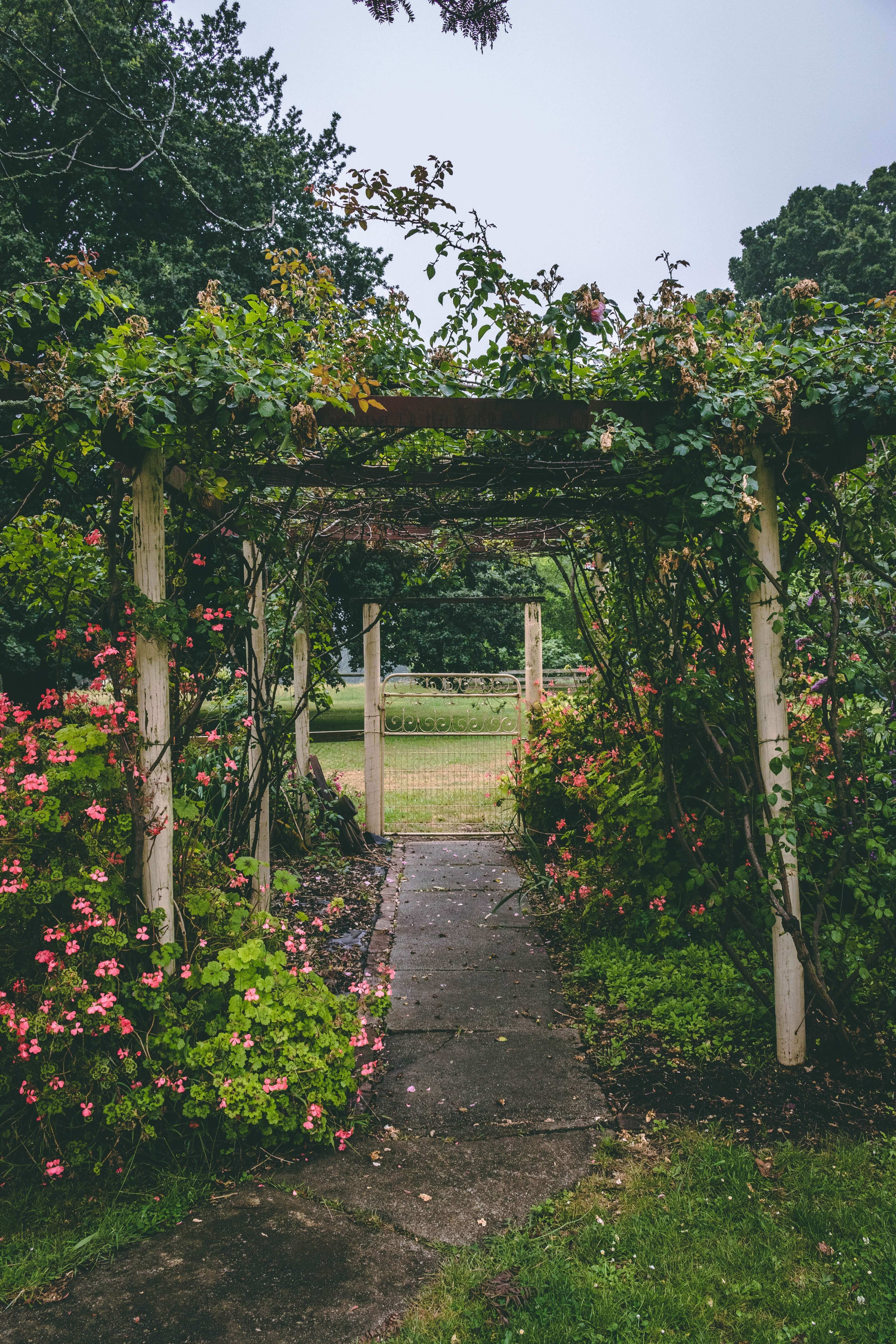 Archway covered in blooms in lawn.
