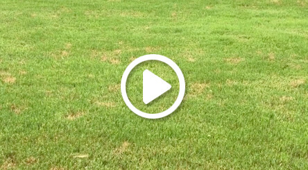 How to Identify and Treat Dollar Spot