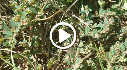 How to Identify and Treat Spurge