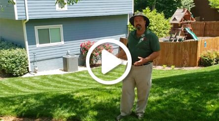 A Healthy and Beautiful Fescue Lawn